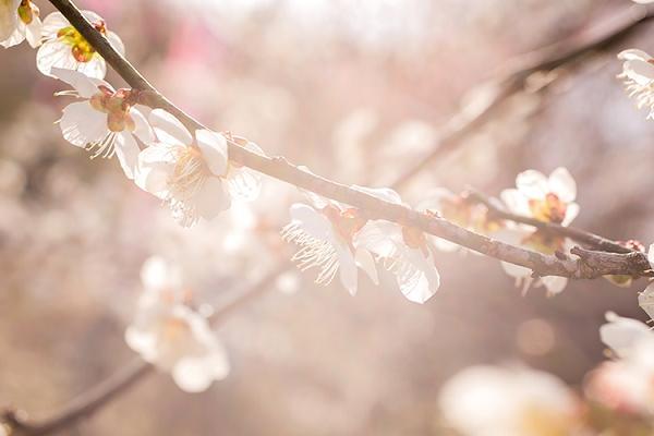 春のお祝いに